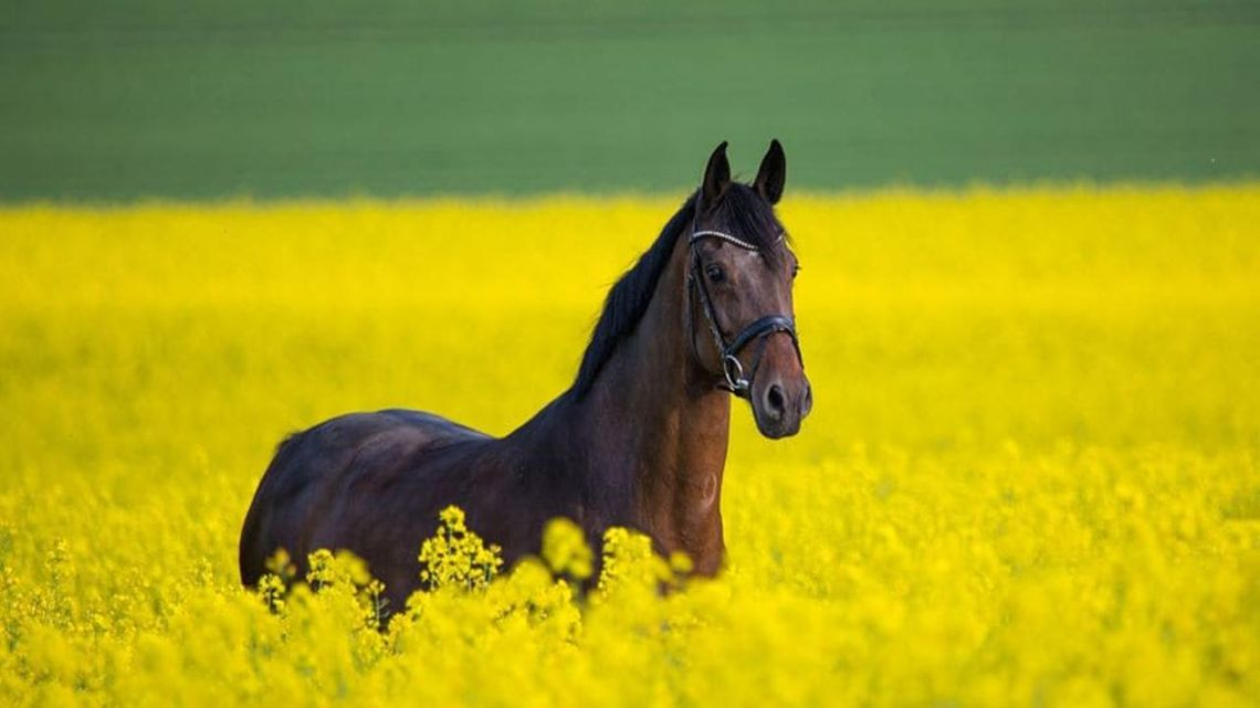 SCHMIEDE20: PFERDE/HORSES