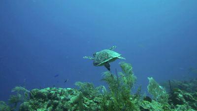 turtle_0
