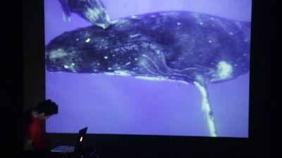 2013 25 Il cantico delle balene