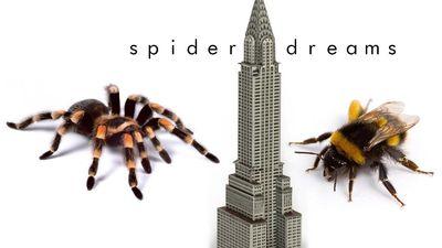 spiderdream