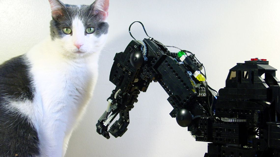 lego hand and cat