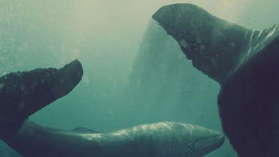 Il cantico delle balene