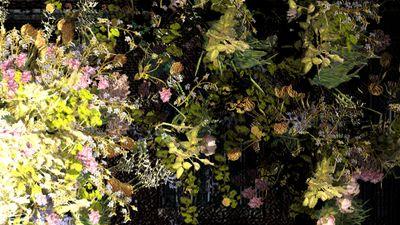 Bloom MAIN IMAGE