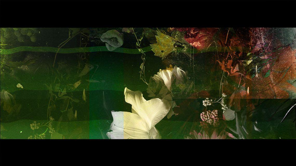 Terra / Bloom