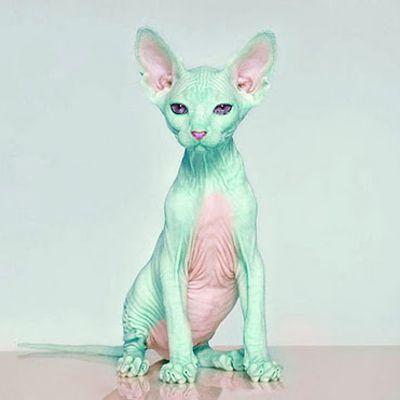 Cyber-Punk Kitten