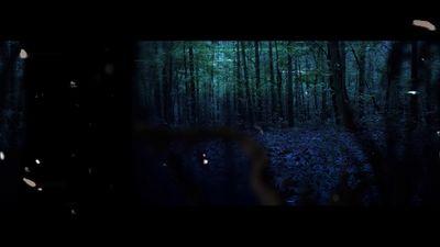 FOREST-teaser